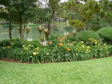 Landscaping Ideas With Daylilies Pdf